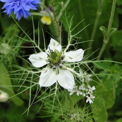 Low Grow Flower Mix