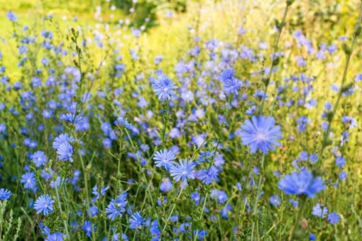JS42 Mixed Herbs for Horses Seeds Online