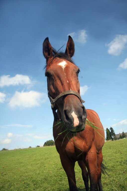 Horse Paddock Seed JS40 Horse & Pony Paddock Mix