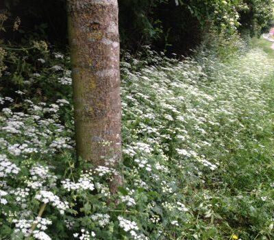 UK Native Woodland Mix Seed Mix Online