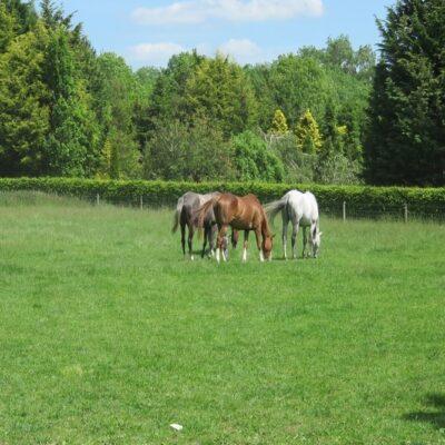 Horse Paddock Seed JS45 Paddock Repair Kit for 1 acre