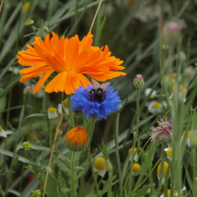 Go Bold Wild Flower Seed Mix