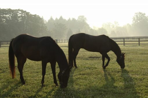 Managing your Horse or Ponies Pasture