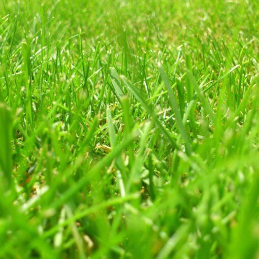 JS28 Rich Meadow Mixture Seeds Online